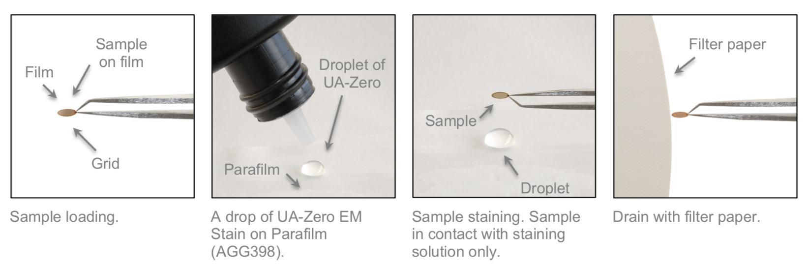 UA-Zero non-radioactive EM Stain